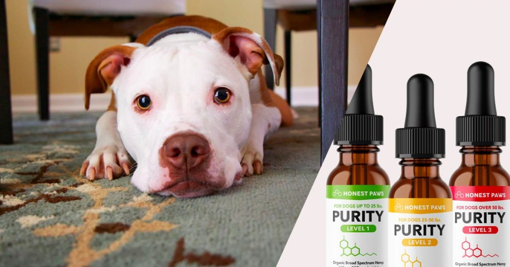 Figure Out That's Speaking About Cbd Oil For Pets In Canada